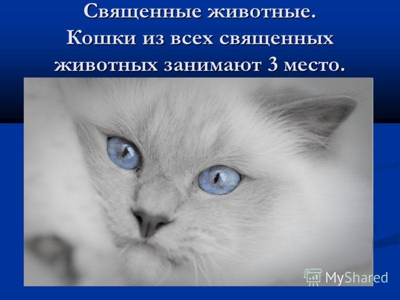 Священные животные. Кошки из всех священных животных занимают 3 место.