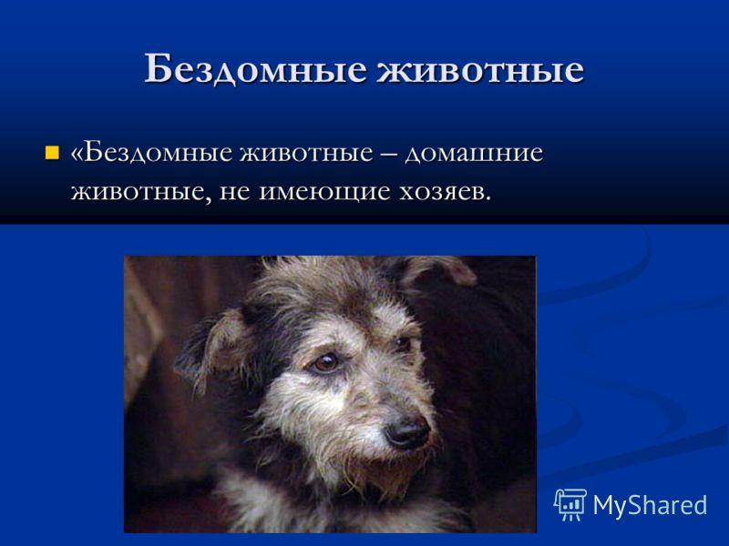 Бездомные животные «Бездомные животные – домашние животные, не имеющие хозяев. «Бездомные животные – домашние животные, не имеющие хозяев.