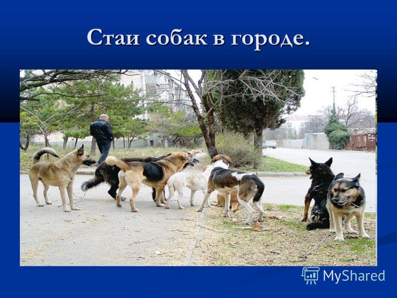 Стаи собак в городе.