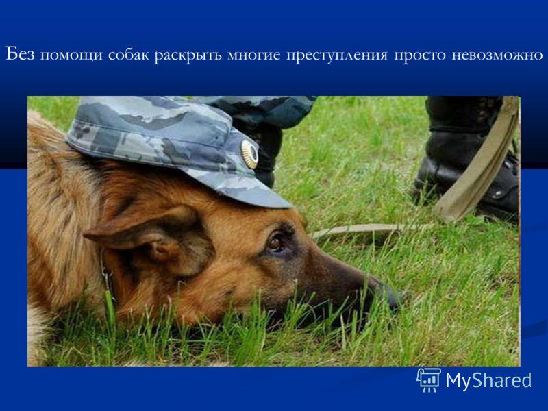 Без помощи собак раскрыть многие преступления просто невозможно