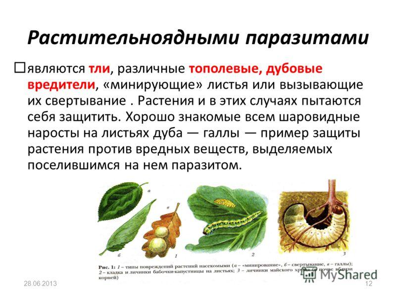 Растительноядными паразитами являются тли, различные тополевые, дубовые вредители, «минирующие» листья или вызывающие их свертывание. Растения и в этих случаях пытаются себя защитить. Хорошо знакомые всем шаровидные наросты на листьях дуба галлы прим