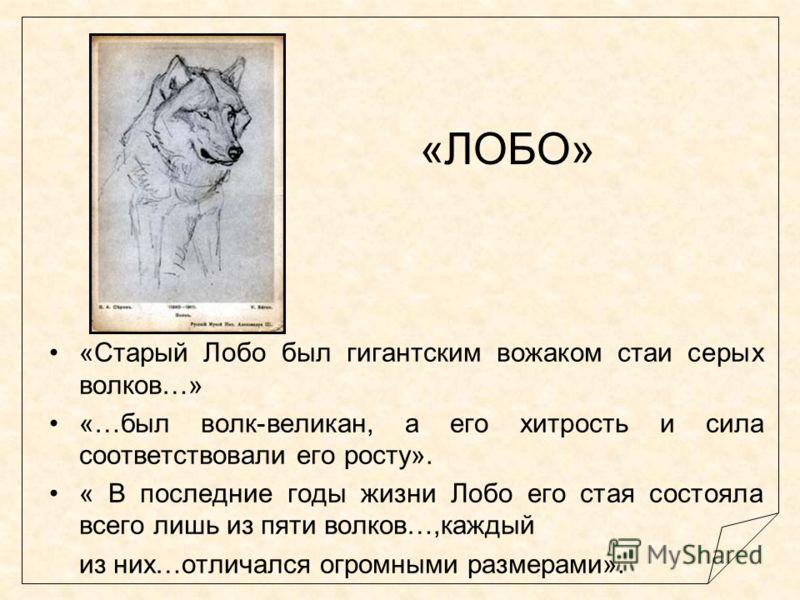 «ЛОБО» «Старый Лобо был гигантским вожаком стаи серых волков…» «…был волк-великан, а его хитрость и сила соответствовали его росту». « В последние годы жизни Лобо его стая состояла всего лишь из пяти волков…,каждый из них…отличался огромными размерам