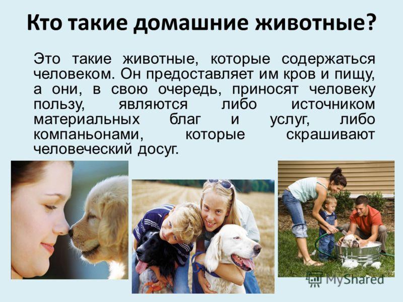 Кто такие домашние животные? Это такие животные, которые содержаться человеком. Он предоставляет им кров и пищу, а они, в свою очередь, приносят человеку пользу, являются либо источником материальных благ и услуг, либо компаньонами, которые скрашиваю