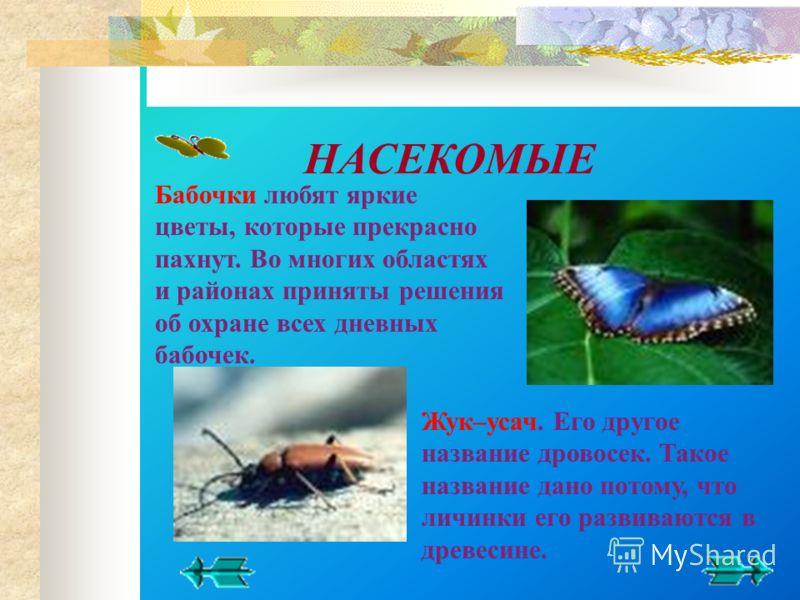 Жук–усач. Его другое название дровосек. Такое название дано потому, что личинки его развиваются в древесине. Бабочки любят яркие цветы, которые прекрасно пахнут. Во многих областях и районах приняты решения об охране всех дневных бабочек. НАСЕКОМЫЕ