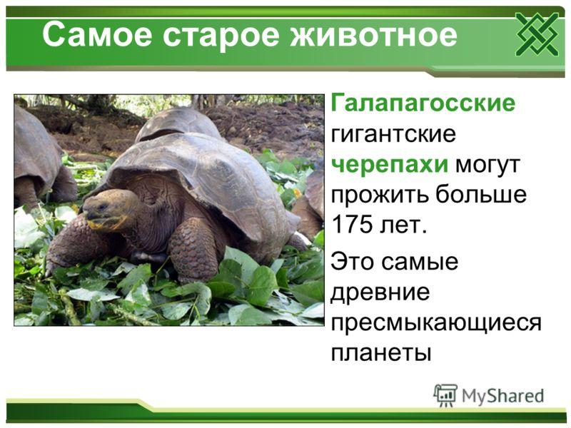 Самое старое животное Галапагосские гигантские черепахи могут прожить больше 175 лет. Это самые древние пресмыкающиеся планеты