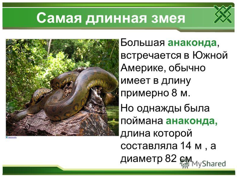 Самая длинная змея Большая анаконда, встречается в Южной Америке, обычно имеет в длину примерно 8 м. Но однажды была поймана анаконда, длина которой составляла 14 м, а диаметр 82 см
