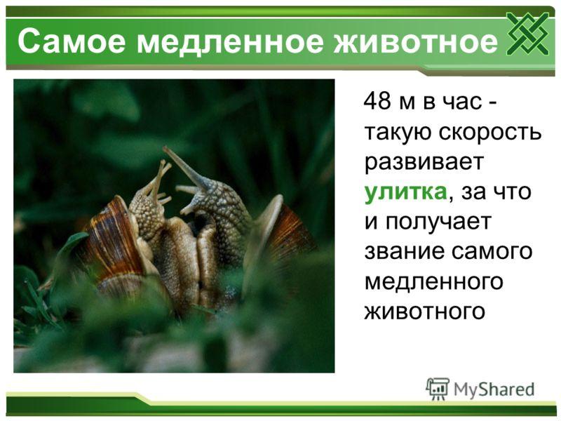 Самое медленное животное 48 м в час - такую скорость развивает улитка, за что и получает звание самого медленного животного
