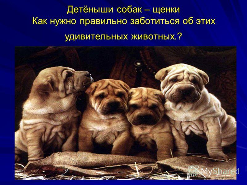 Детёныши собак – щенки Как нужно правильно заботиться об этих удивительных животных.?
