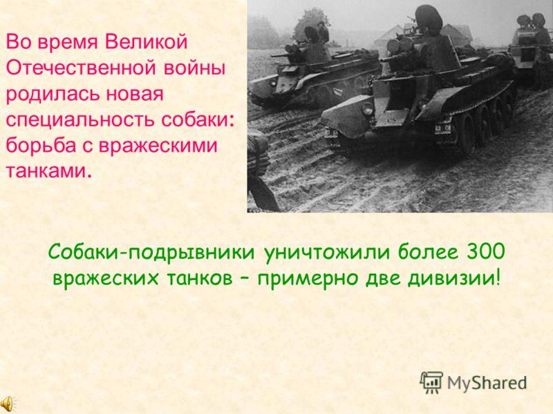 Во время Великой Отечественной войны родилась новая специальность собаки : борьба с вражескими танками. Собаки-подрывники уничтожили более 300 вражеских танков – примерно две дивизии!
