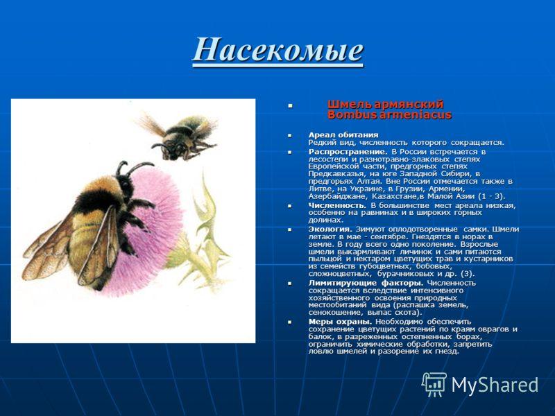 Насекомые Шмель армянский Bombus armeniacus Шмель армянский Bombus armeniacus Ареал обитания Редкий вид, численность которого сокращается. Ареал обитания Редкий вид, численность которого сокращается. Распроcтранение. В России встречается в лесостепи