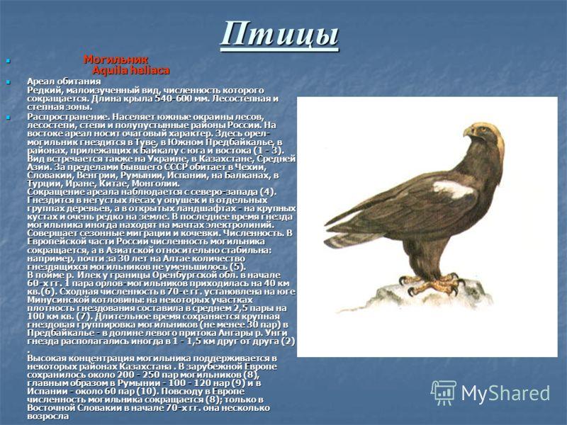 Птицы Могильник Aquila heliaca Могильник Aquila heliaca Ареал обитания Редкий, малоизученный вид, численность которого сокращается. Длина крыла 540-600 мм. Лесостепная и степная зоны. Ареал обитания Редкий, малоизученный вид, численность которого сок
