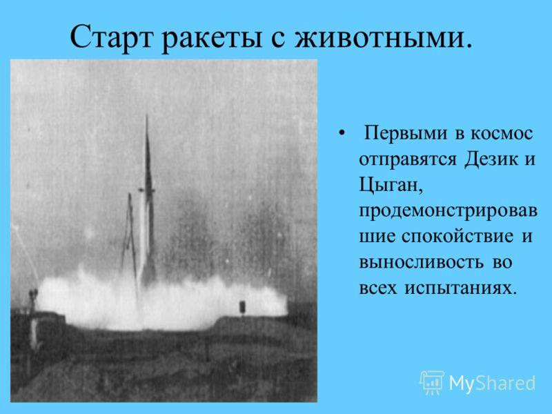 Старт ракеты с животными. Первыми в космос отправятся Дезик и Цыган, продемонстрировав шие спокойствие и выносливость во всех испытаниях.