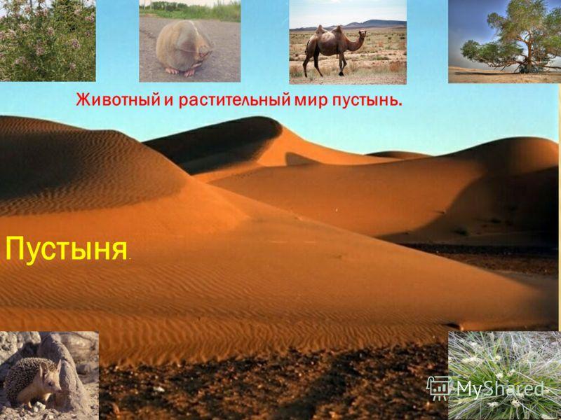 Пустыня. Животный и растительный мир пустынь.