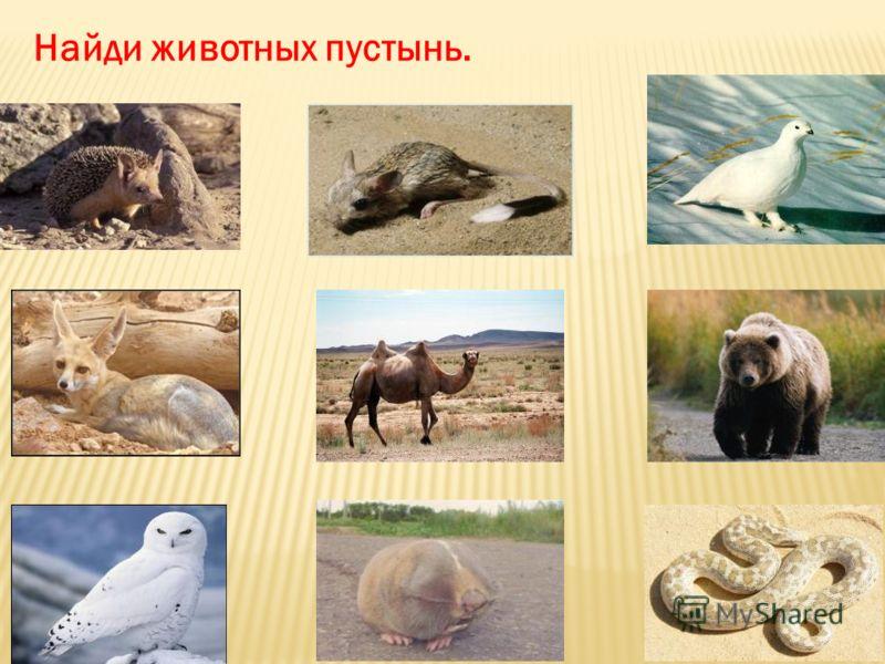 Найди животных пустынь.