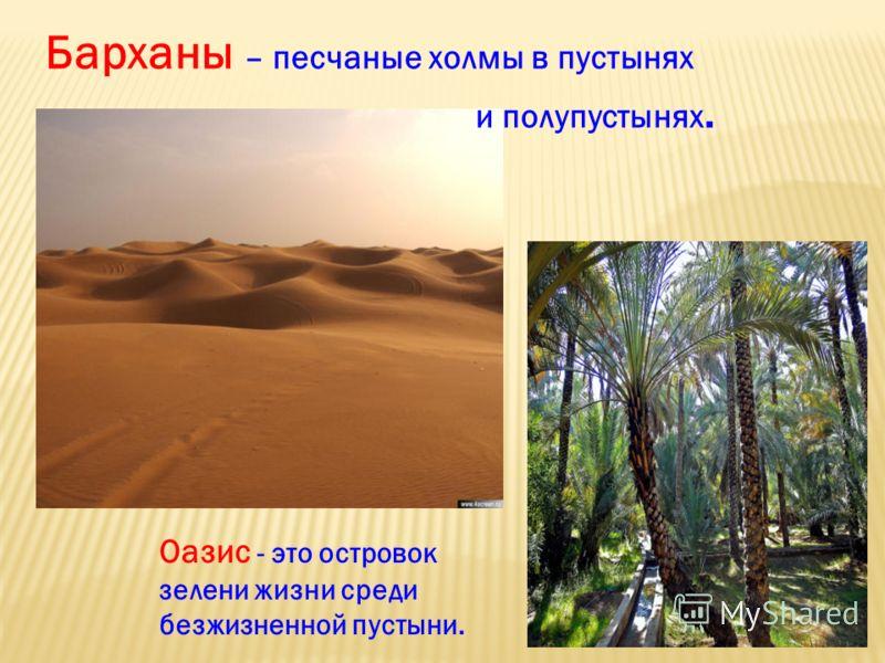 Барханы – песчаные холмы в пустынях и полупустынях. Оазис - это островок зелени жизни среди безжизненной пустыни.
