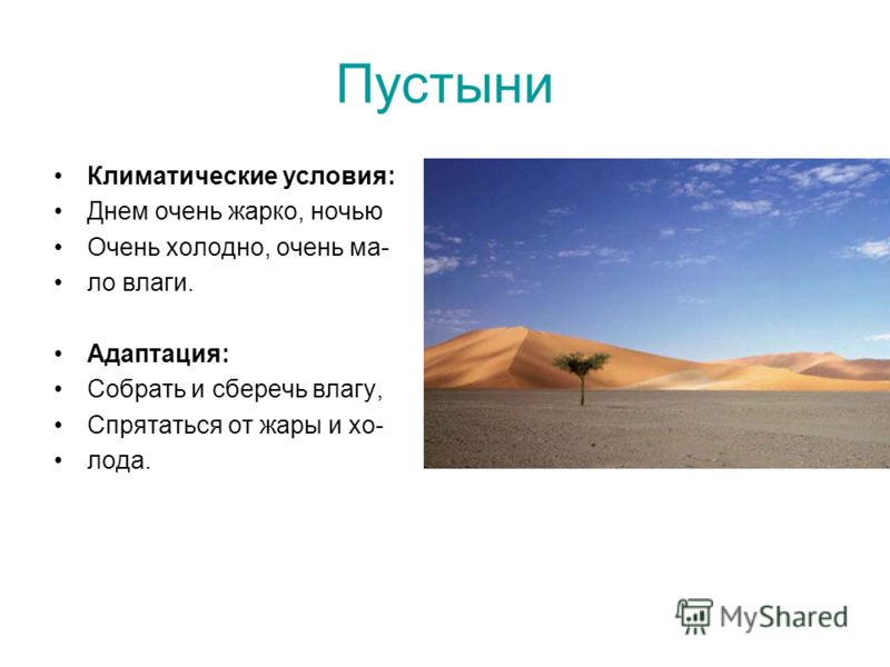 Пустыни Климатические условия: Днем очень жарко, ночью Очень холодно, очень ма- ло влаги. Адаптация: Собрать и сберечь влагу, Спрятаться от жары и хо- лода.