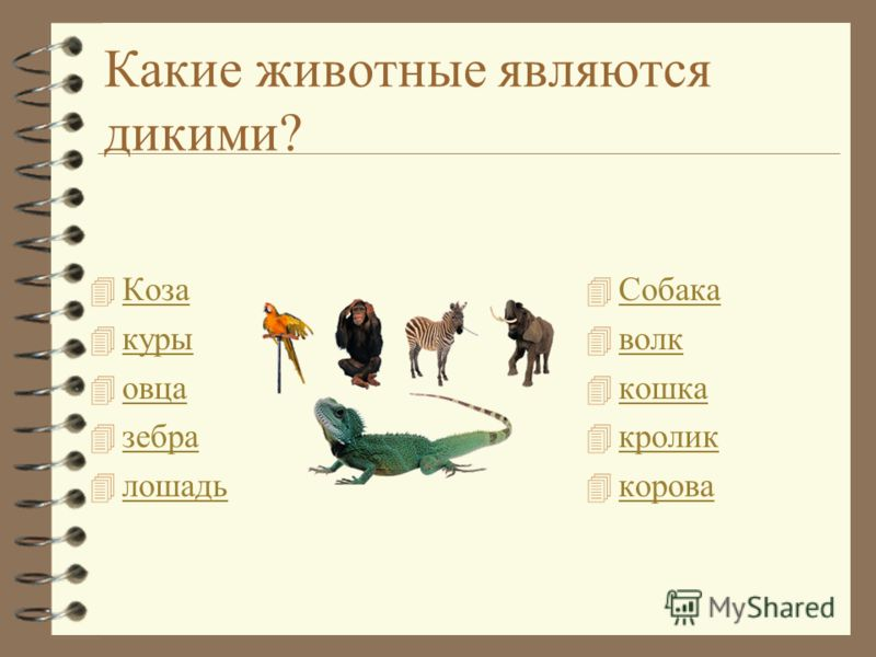корова собака кошка свинья осёл