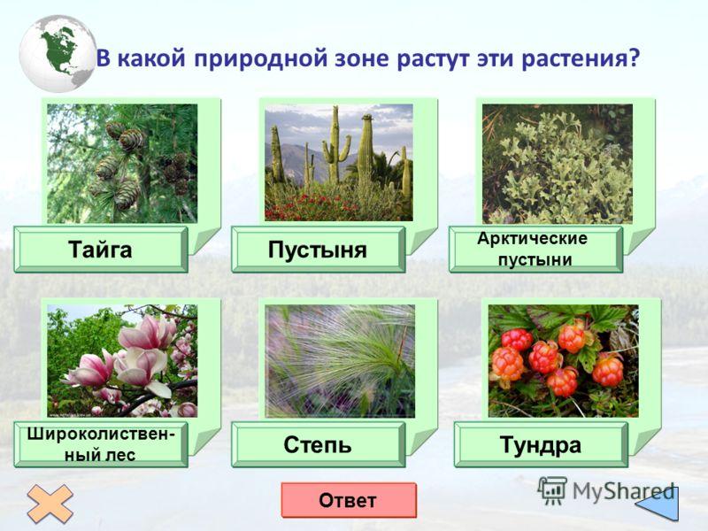 В какой природной зоне растут эти растения? ТайгаПустыня Арктические пустыни Широколиствен- ный лес СтепьТундра Ответ