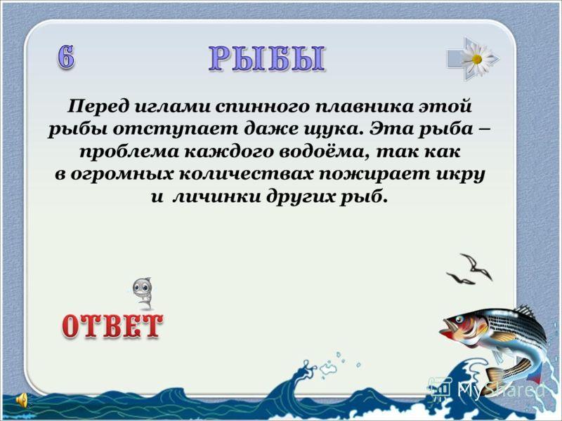 На дворе зима ли, осень, В глубине родной реки Мы тельняшки гордо носим, Как лихие моряки.