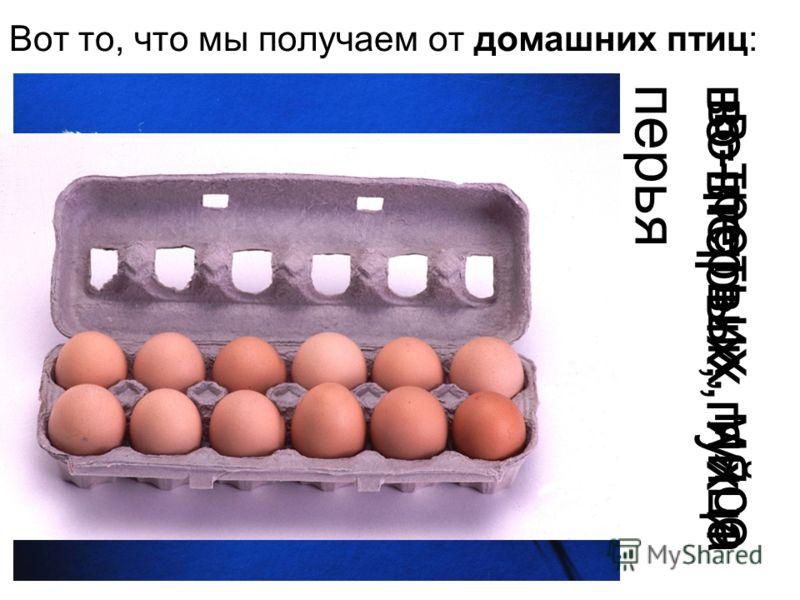 Вот то, что мы получаем от домашних птиц: во-первых, яйца во-вторых, пух иперья в-третьих, мясо