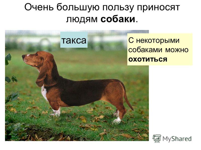 Очень большую пользу приносят людям собаки. С некоторымисобаками можноохотиться такса