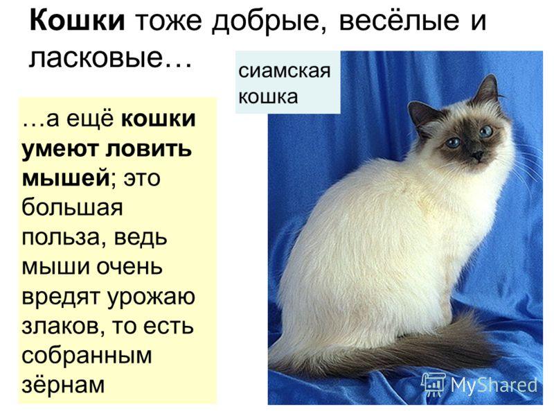 Кошки тоже добрые, весёлые и ласковые… …а ещё кошки умеют ловитьмышей ; это большаяпольза, ведьмыши оченьвредят урожаюзлаков, то естьсобраннымзёрнам сиамскаякошка