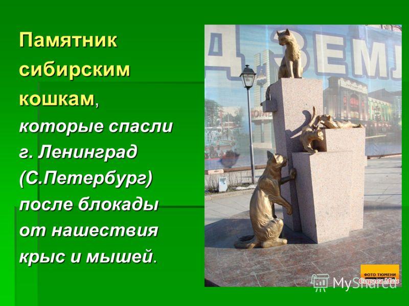 Памятниксибирским кошкам, которые спасли г. Ленинград (С.Петербург) после блокады от нашествия крыс и мышей.