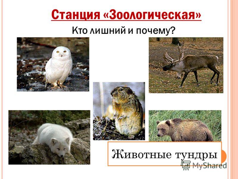 Станция «Зоологическая» Животные тундры Кто лишний и почему?