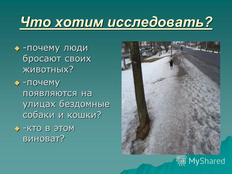 Что хотим исследовать? -почему люди бросают своих животных? -почему люди бросают своих животных? -почему появляются на улицах бездомные собаки и кошки? -почему появляются на улицах бездомные собаки и кошки? -кто в этом виноват? -кто в этом виноват?