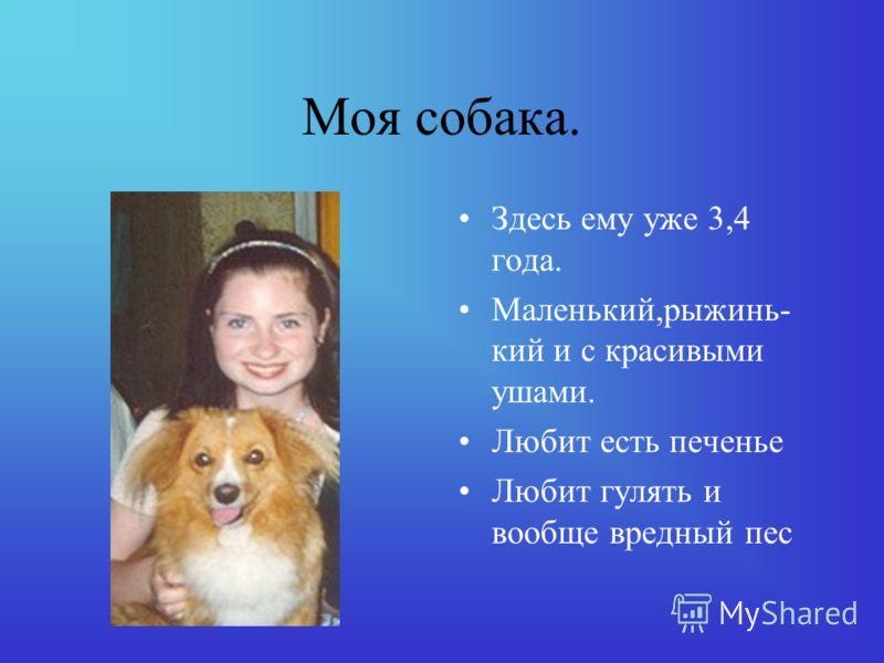 Собака Оксаны. Собаку зовут Нена Ей 3 года Ласкавая собака Любит гулять на улице