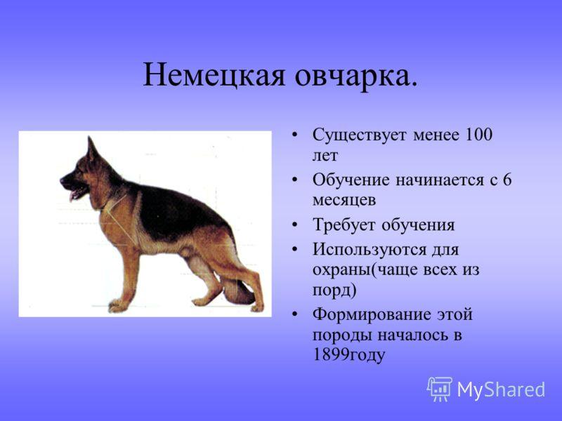 Интересные факты о собаках. Собаки живут с нами около 13 тыс.лет Это первое животное,которое приручил человек. В Англии наезд на собак наказывается строже, чем наезд на человека. Считается, что животное беззащитно перед автотранспортом, так как не мо