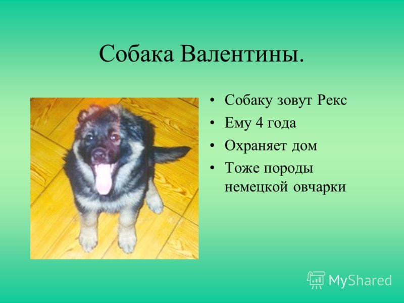 Собака Евгении. Собаку зовут Макс Ему 5 лет Дрессированная собака Любит собачий корм Дружелюбная собака