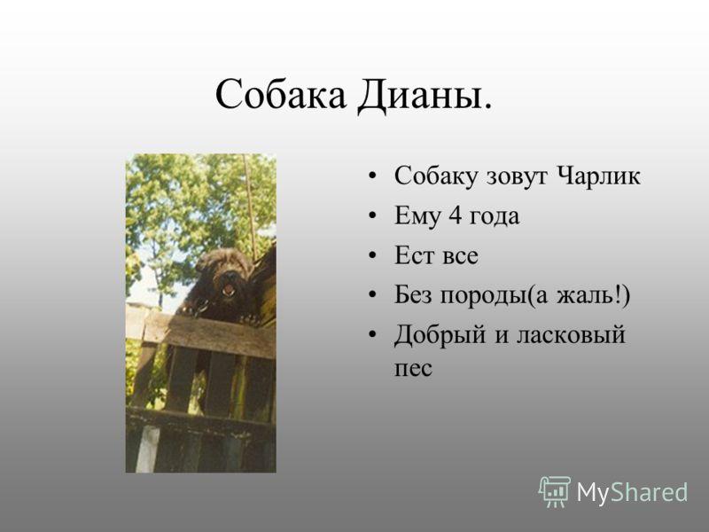 Собака Валентины. Собаку зовут Рекс Ему 4 года Охраняет дом Тоже породы немецкой овчарки