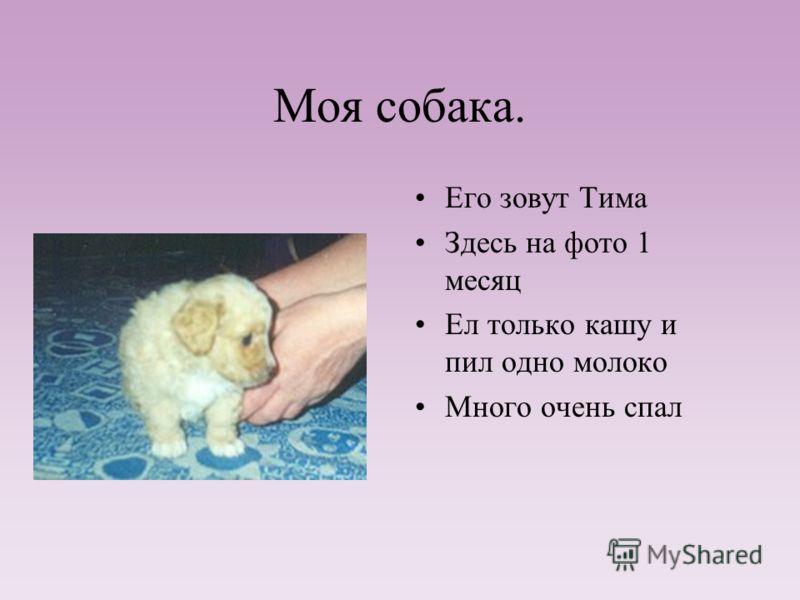 Собака Дианы. Собаку зовут Чарлик Ему 4 года Ест все Без породы(а жаль!) Добрый и ласковый пес