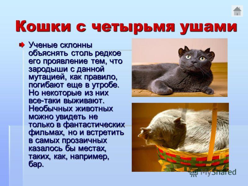 Кошки с четырьмя ушами Ученые склонны объяснять столь редкое его проявление тем, что зародыши с данной мутацией, как правило, погибают еще в утробе. Но некоторые из них все-таки выживают. Необычных животных можно увидеть не только в фантастических фи