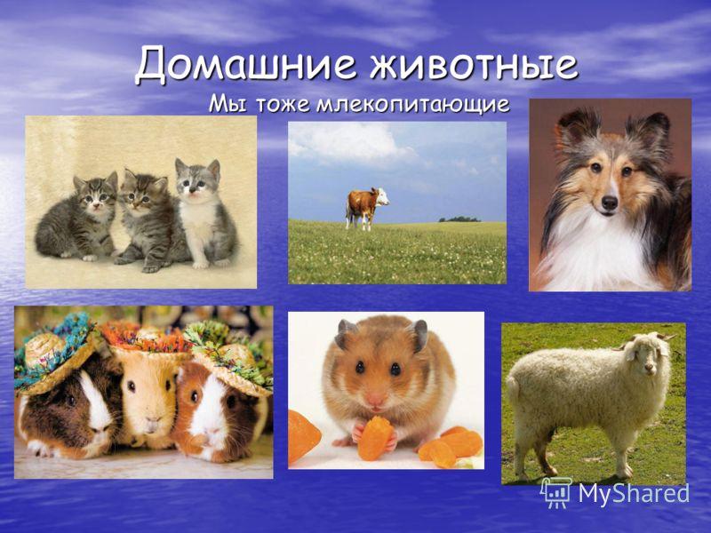 Домашние животные Мы тоже млекопитающие