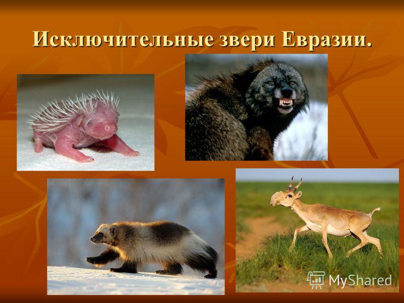 Исключительные звери Евразии.