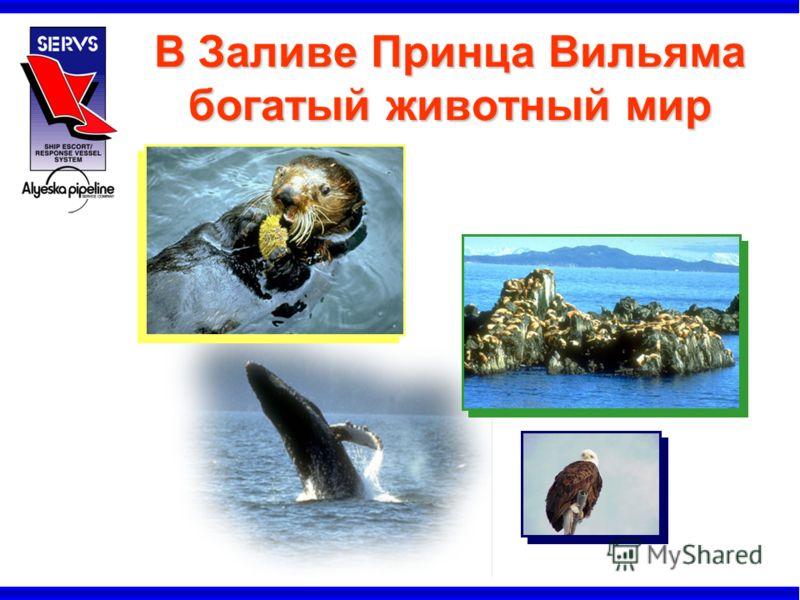 В Заливе Принца Вильяма богатый животный мир