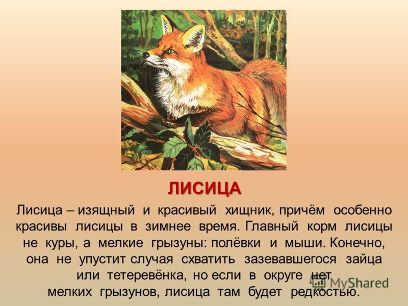 ЛИСИЦА Лисица – изящный и красивый хищник, причём особенно красивы лисицы в зимнее время. Главный корм лисицы не куры, а мелкие грызуны: полёвки и мыши. Конечно, она не упустит случая схватить зазевавшегося зайца или тетеревёнка, но если в округе нет