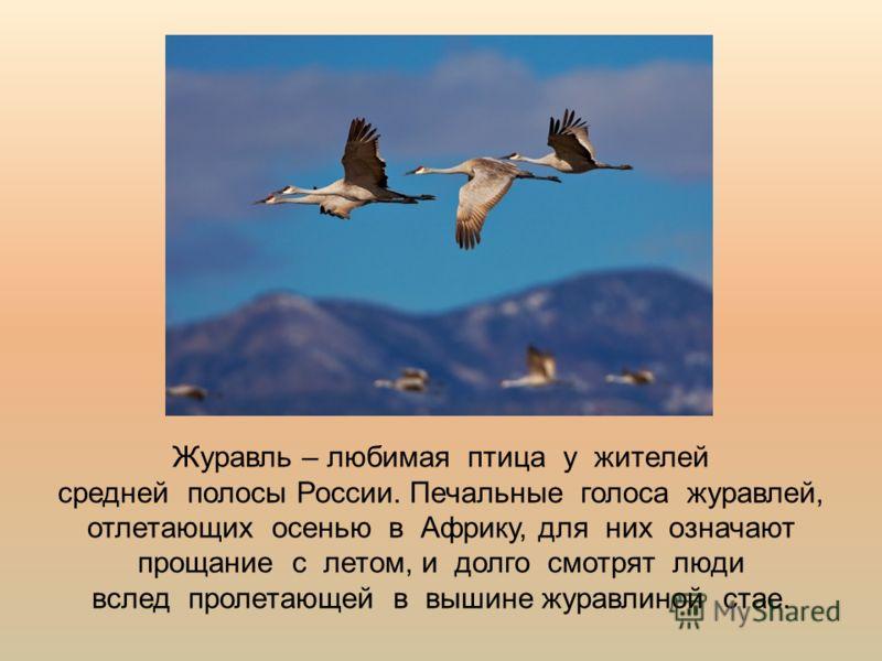 Журавль – любимая птица у жителей средней полосы России. Печальные голоса журавлей, отлетающих осенью в Африку, для них означают прощание с летом, и долго смотрят люди вслед пролетающей в вышине журавлиной стае.