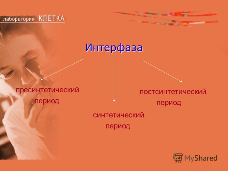 Интерфаза пресинтетический период синтетический период постсинтетический период