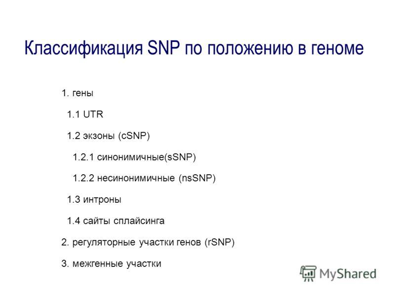Классификация SNP по положению в геноме 1. гены 1.1 UTR 1.2 экзоны (cSNP) 1.2.1 синонимичные(sSNP) 1.2.2 несинонимичные (nsSNP) 1.3 интроны 1.4 сайты сплайсинга 2. регуляторные участки генов (rSNP) 3. межгенные участки