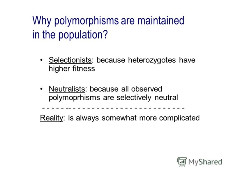 Why polymorphisms are maintained in the population? Selectionists: because heterozygotes have higher fitness Neutralists: because all observed polymoprhisms are selectively neutral - - - - - -- - - - - - - - - - - - - - - - - - - - - - - - - Reality:
