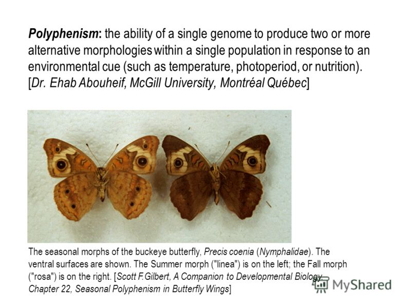 Polyphenism : the ability of a single genome to produce two or more alternative morphologies within a single population in response to an environmental cue (such as temperature, photoperiod, or nutrition). [ Dr. Ehab Abouheif, McGill University, Mont