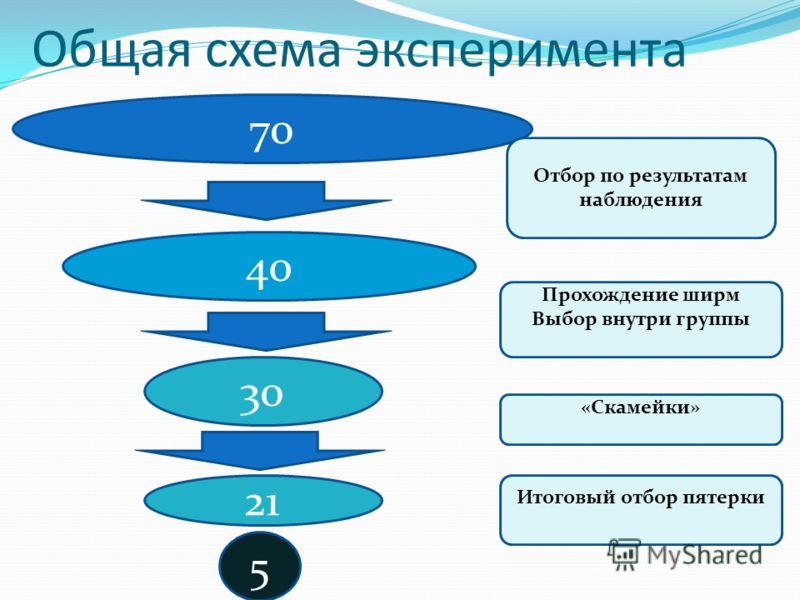 Общая схема эксперимента 70 40 30 5 Отбор по результатам наблюдения Прохождение ширм Выбор внутри группы «Скамейки» Итоговый отбор пятерки 21