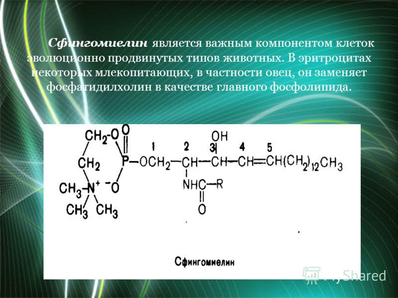 Сфингомиелин является важным компонентом клеток эволюционно продвинутых типов животных. В эритроцитах некоторых млекопитающих, в частности овец, он заменяет фосфатидилхолин в качестве главного фосфолипида.