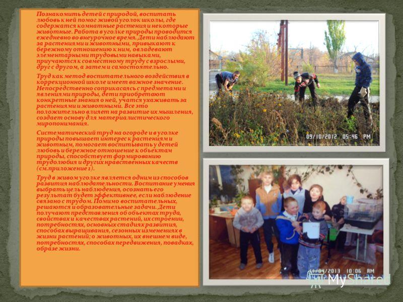 Познакомить детей с природой, воспитать любовь к ней помог живой уголок школы, где содержатся комнатные растения и некоторые животные. Работа в уголке природы проводится ежедневно во внеурочное время. Дети наблюдают за растениями и животными, привыка