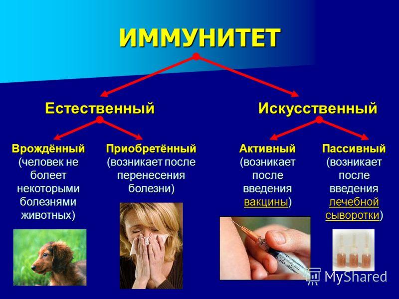 ИММУНИТЕТ Естественный Врождённый (человек не болеет некоторыми болезнями животных) Приобретённый (возникает после перенесения болезни) Искусственный Активный (возникает после введения вакцины) вакцины Пассивный (возникает после введения лечебной сыв
