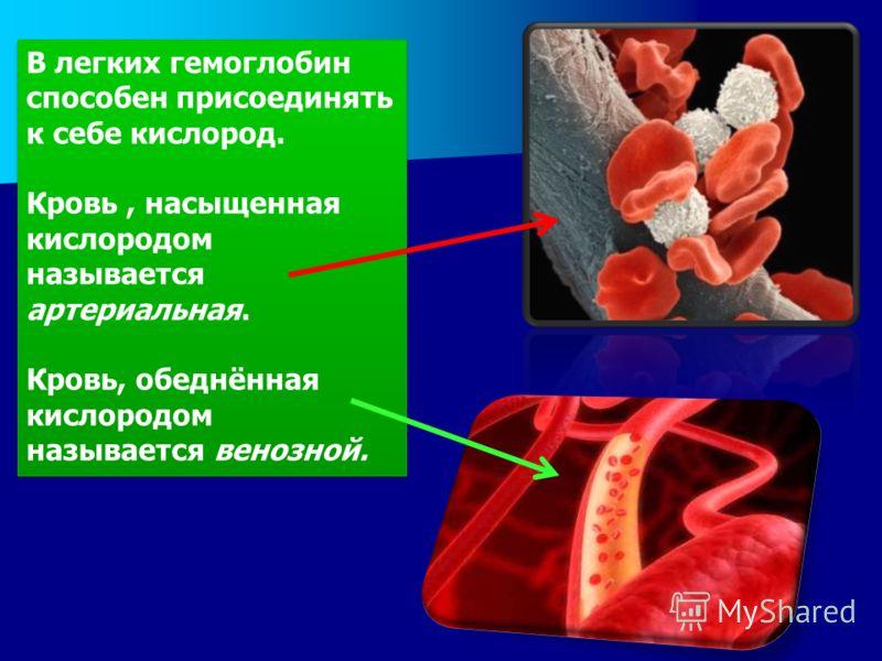 В легких гемоглобин способен присоединять к себе кислород. Кровь, насыщенная кислородом называется артериальная. Кровь, обеднённая кислородом называется венозной. В легких гемоглобин способен присоединять к себе кислород. Кровь, насыщенная кислородом