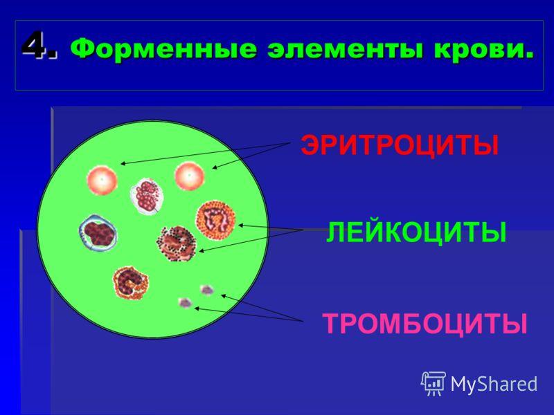 4. Форменные элементы крови. ЭРИТРОЦИТЫ ЛЕЙКОЦИТЫ ТРОМБОЦИТЫ